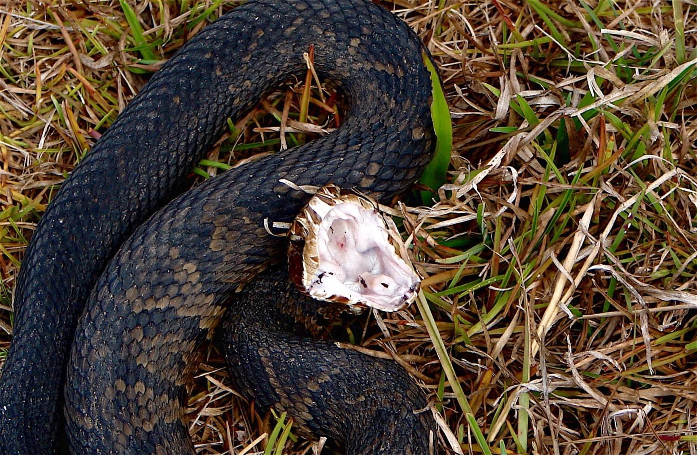 Venomous Critters Texas Poison Center Network